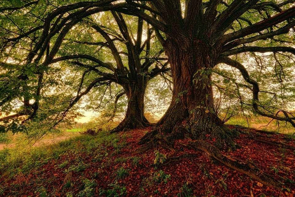 orman ağaçlar