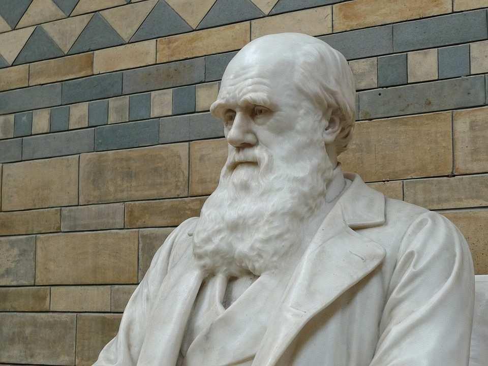 charles darwin büstü