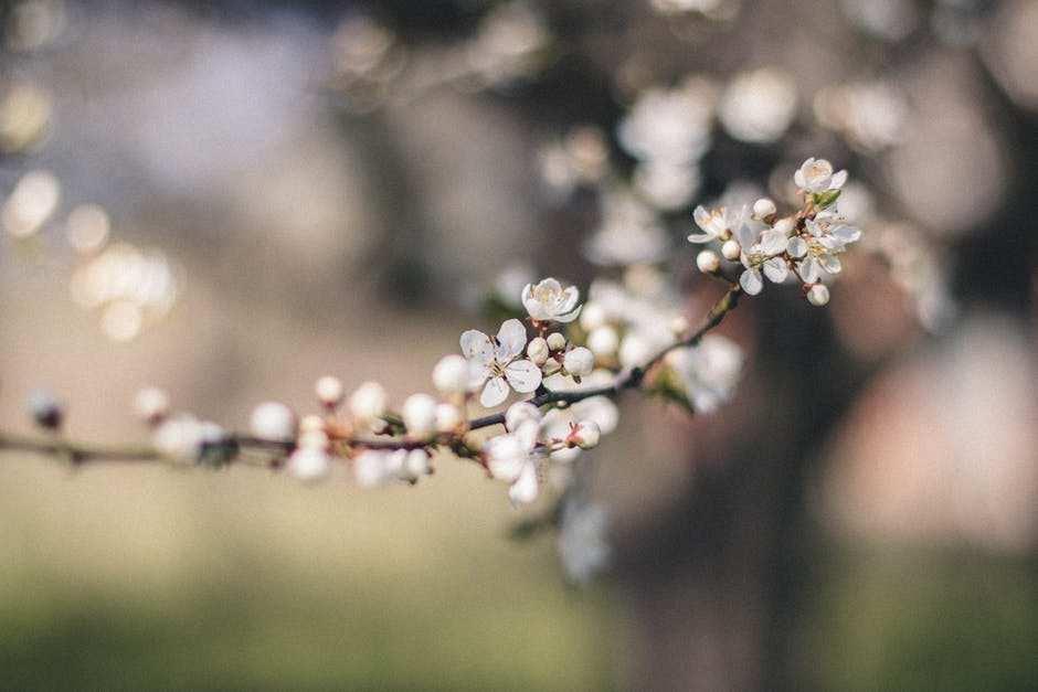 çiçek tomurcukları