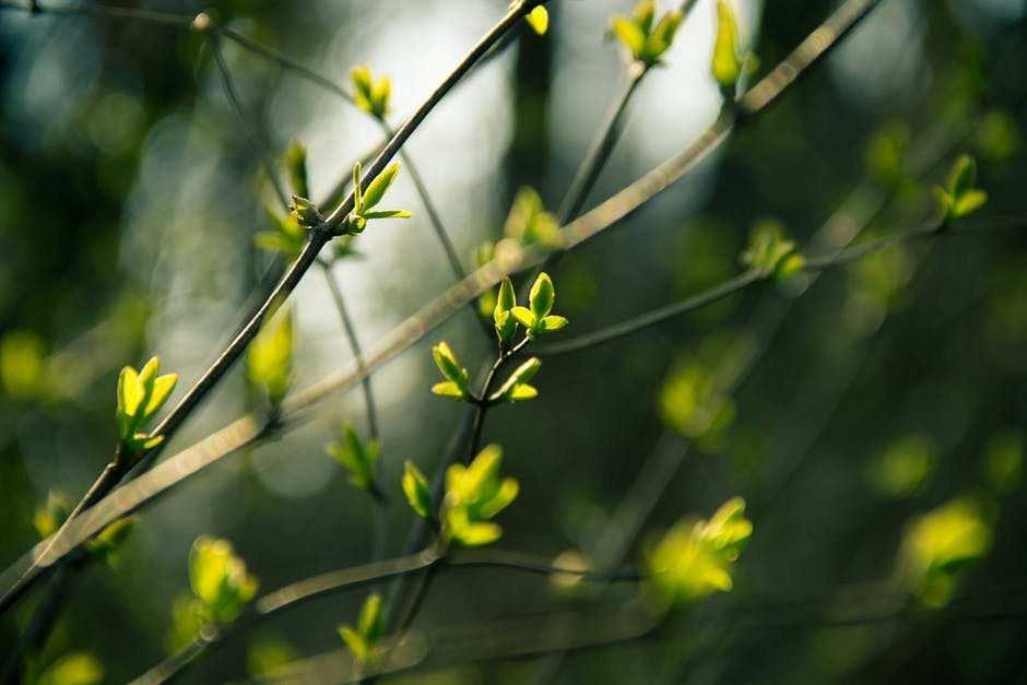 yapraklar