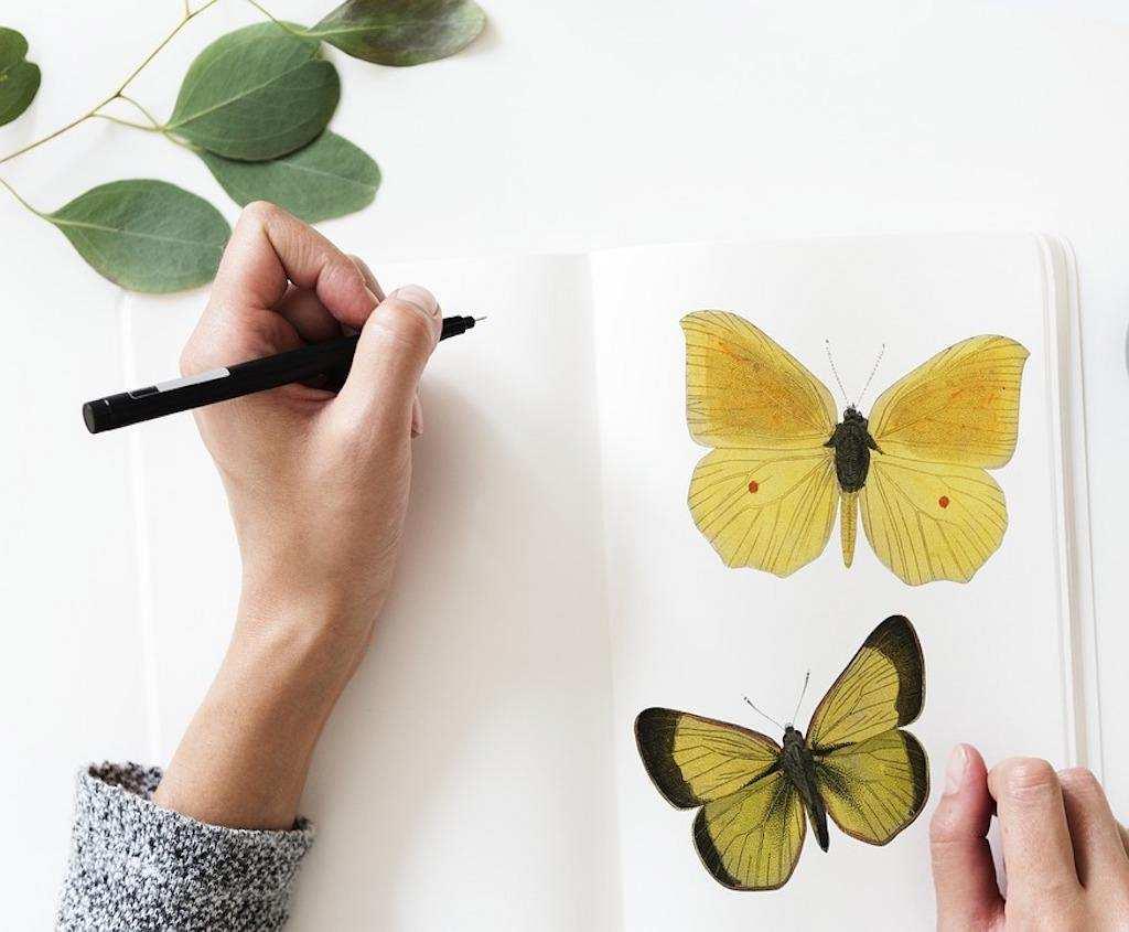 dijital minimalizm defter kelebek resimleri