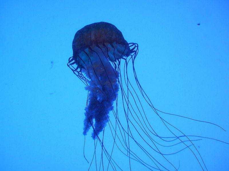 dünyanın en zehirli hayvanları kutu denizanası