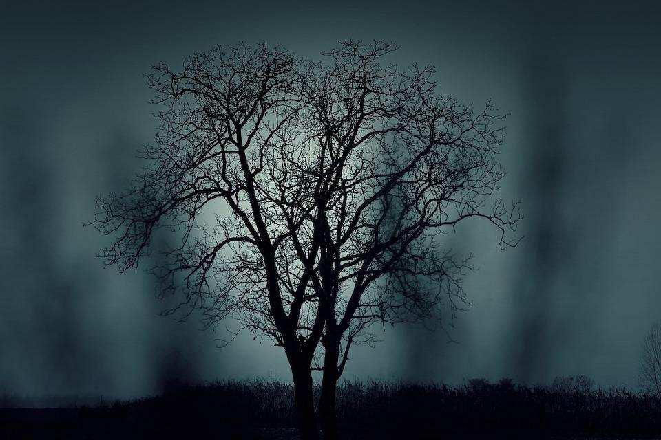 ezoterizm ağaç gece puslu