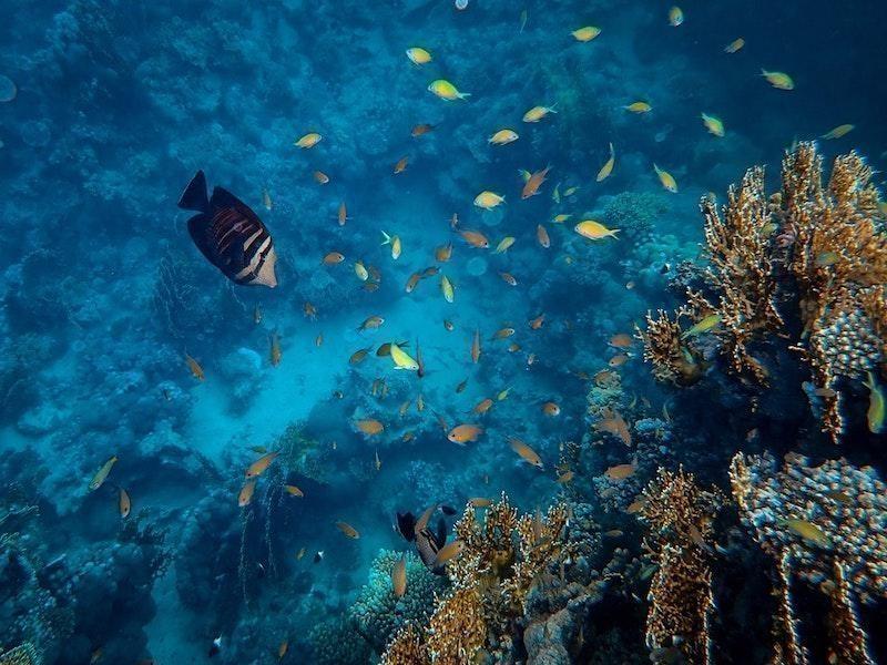 resif sualtı balık sürüsü
