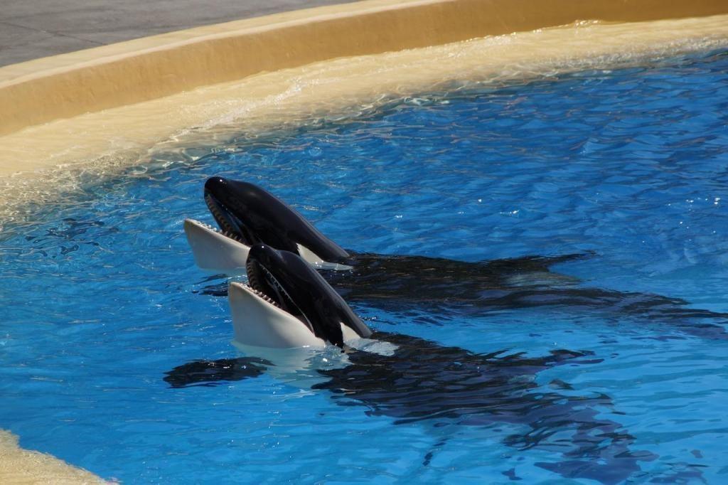 dişli yunuslar katil balina