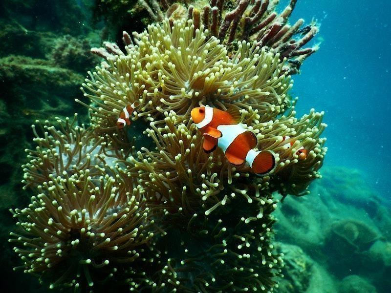resif sualtı