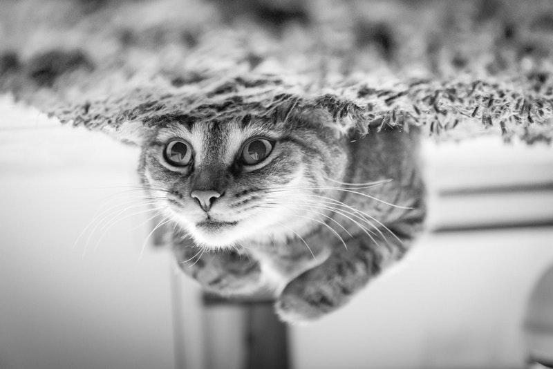 up down cat
