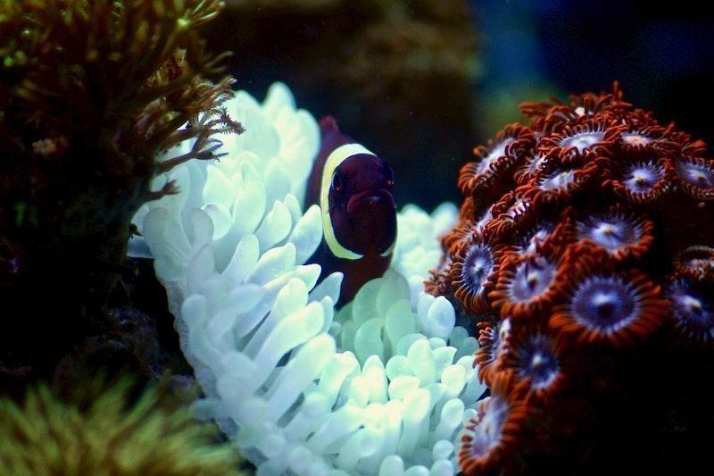 resif sualtı balık