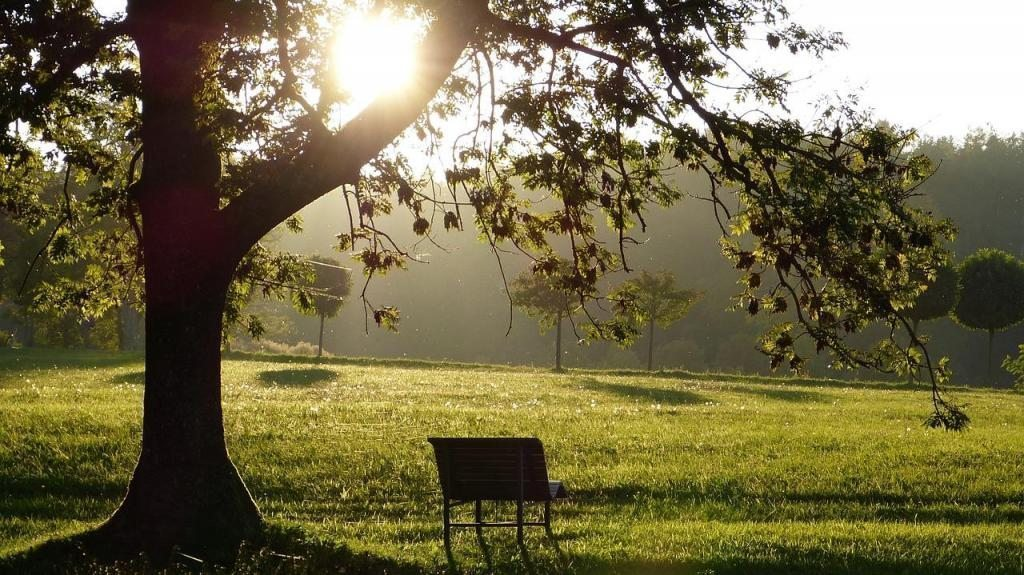 doğa bank ağaç