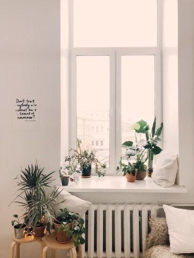 oda dekorasyonu bitkiler