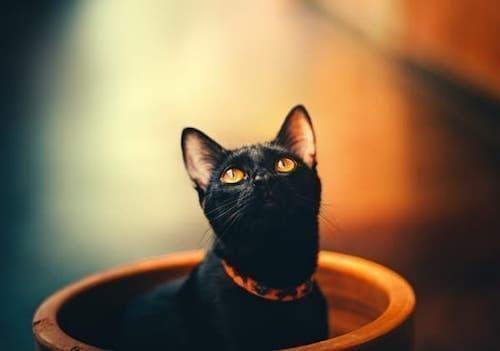batıl inançlar kara kedi