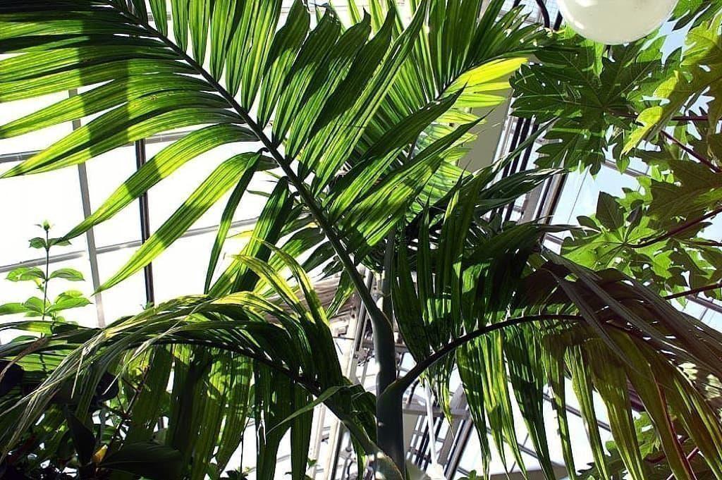 arka havayı temizleyen bitkiler