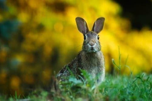tavşan batıl inançlar