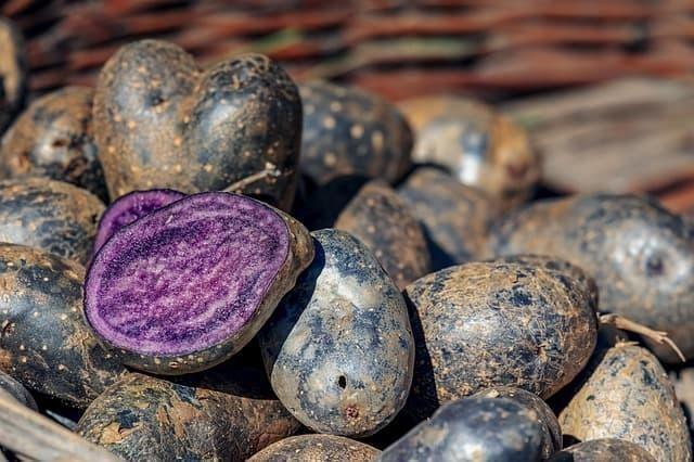mavi patates