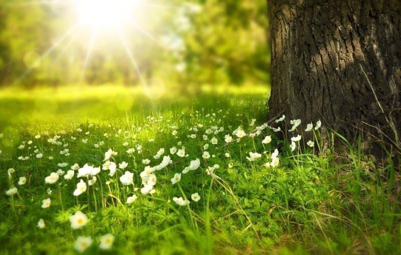 çiçekler güneş ışığı