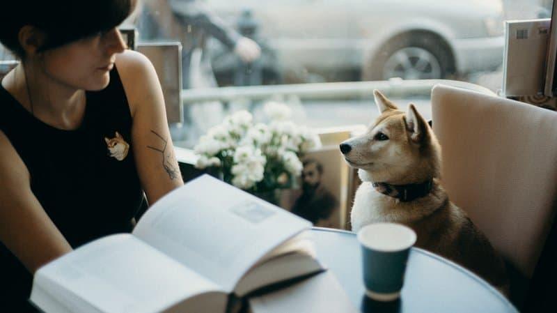 köpek kadın kafe evcil hayvan dostu