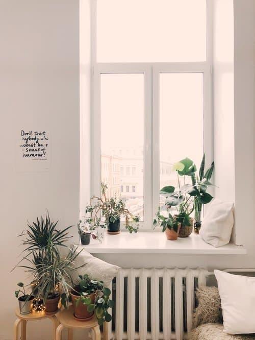 lagom ev bitkiler