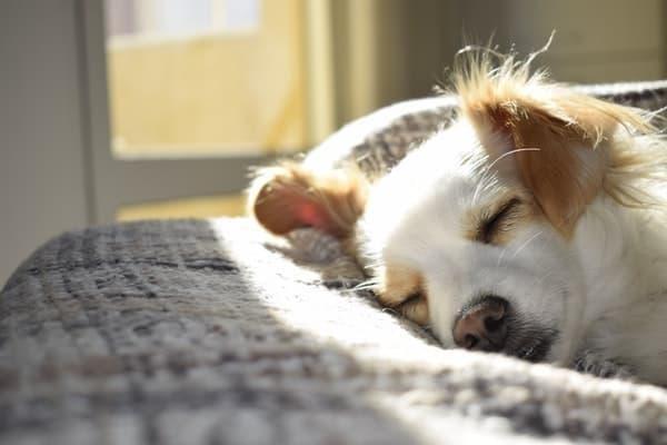 yavru köpek yatak uyumak