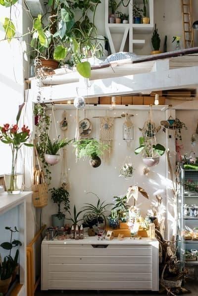 ev wabi sabi bitkiler
