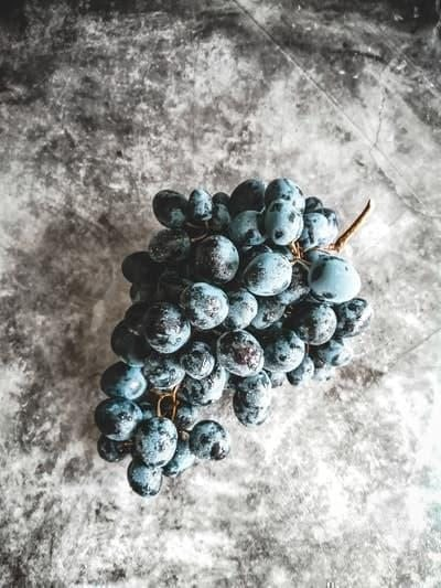 siyah üzüm şaraplık üzümleri