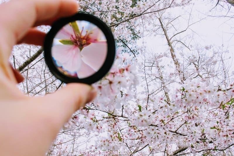 odaklanma çiçek
