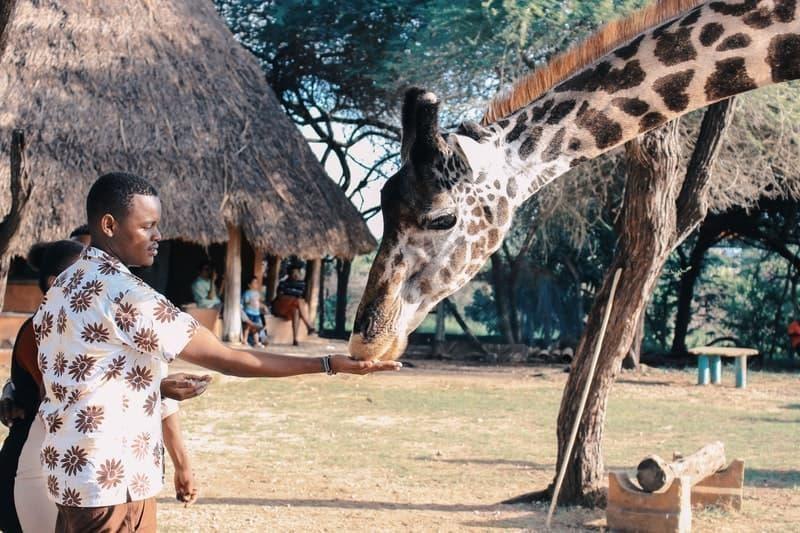 afrika kıtası zürafa