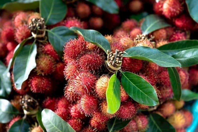rambutan tropikal meyve