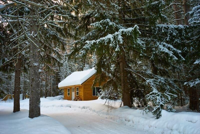 kış orman