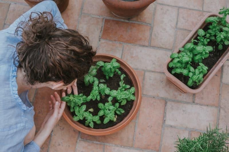 yaz etkinliği bahçecilik