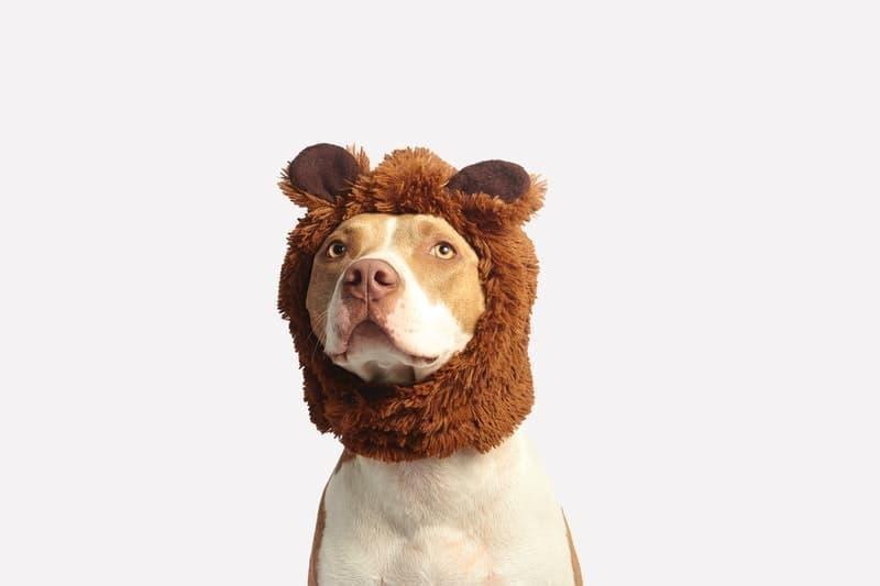 evcil hayvan kostümü