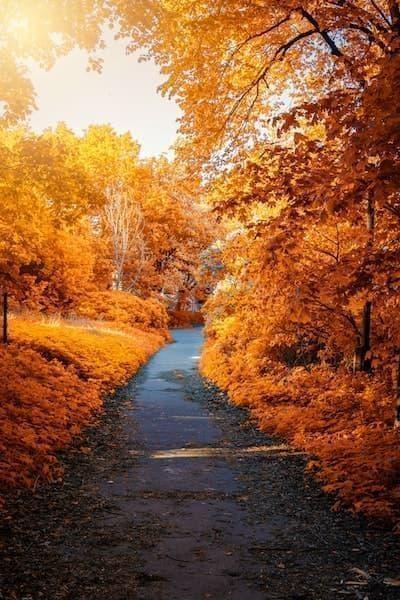sonbahar orman doğa yürüyüşü